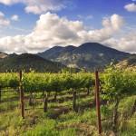 vines napa spring