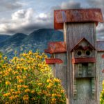 calistoga birdhouse and mountain