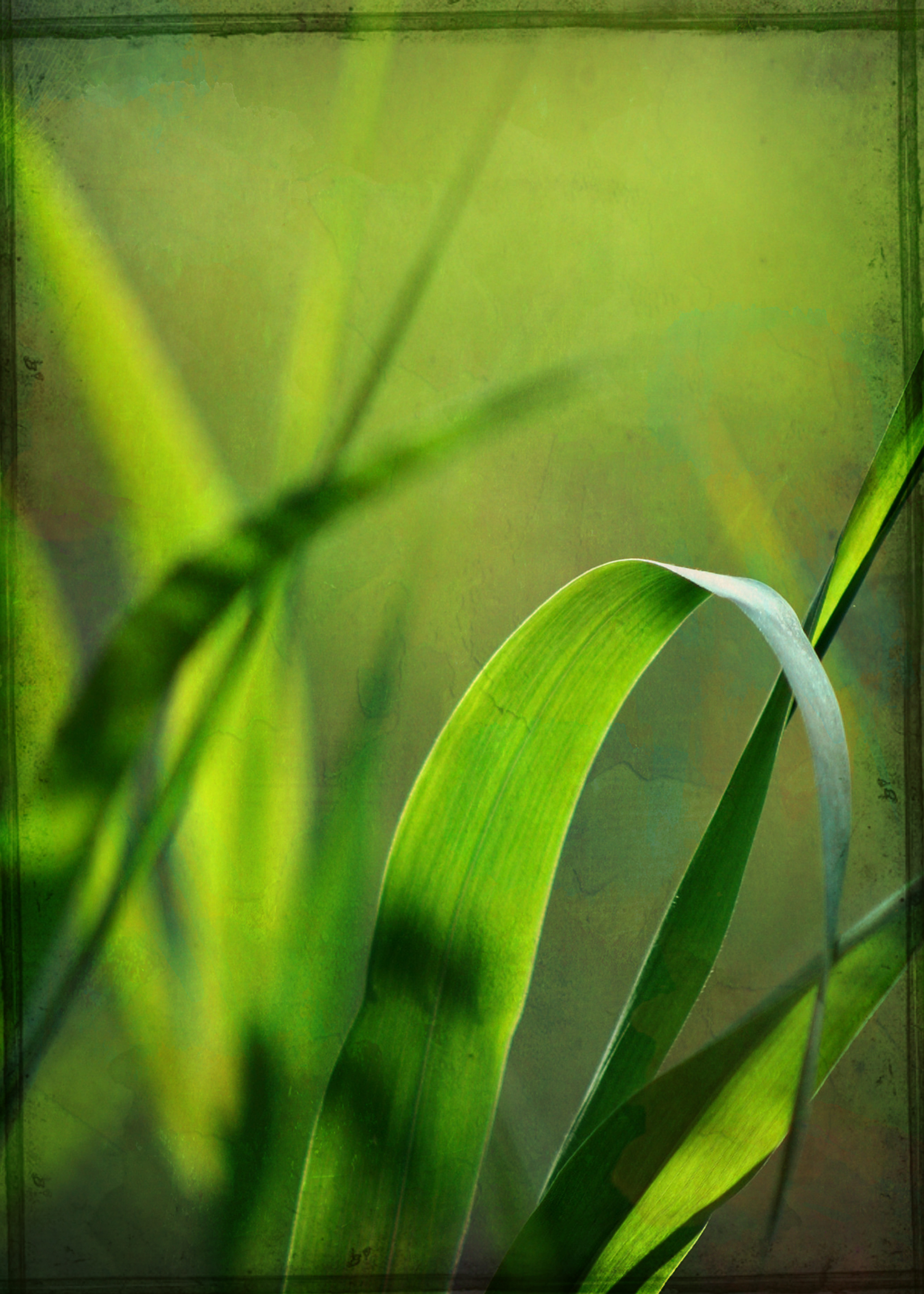 Green grass stock image free