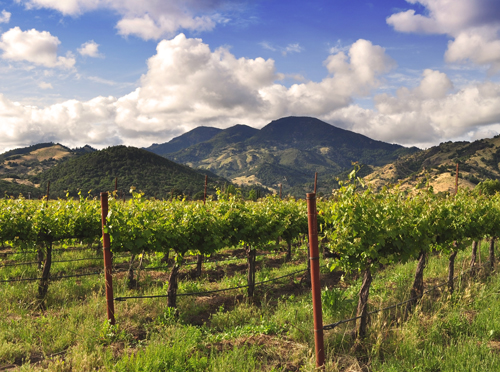 Vines and Mountain