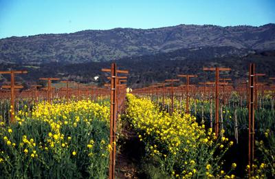 Landscape Vineyard Slide scan