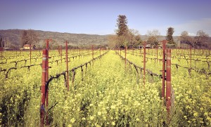 vintage retro vineyard